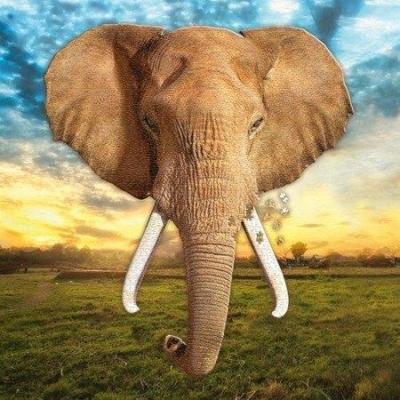 Puzzle I AM - ELEPHANT - Słoń.jpg
